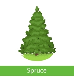 Spruce cartoon tree vector image vector image