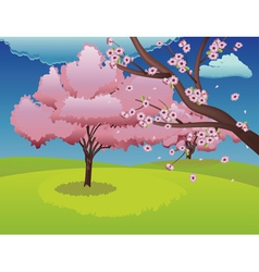 Sakura on Grass Field vector image vector image