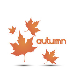 autumn leaves leaf background fall white yellow vector image vector image