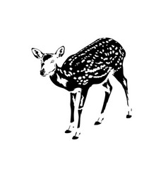 Spotted deer silhouette in black and white vector