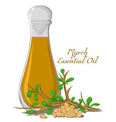 Essential oil of myrrh vector