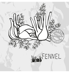 Hand drawn whole and sliced fennel vector