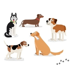 Happy dog characters on white background vector image vector image