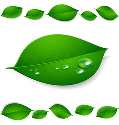 realistic green leaves with water drops isolated vector image vector image