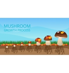 Mushroom growth process infographics vector