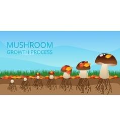 Mushroom growth process infographics vector