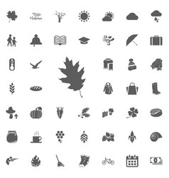 flat maple leaf icon isolated on white vector image