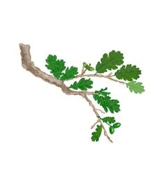 Oak-branch vector image vector image