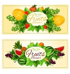 Natural fruits and berries banners vector