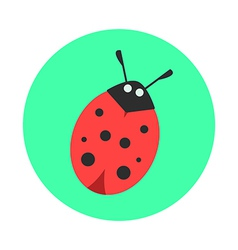 ladybug on a green background vector image
