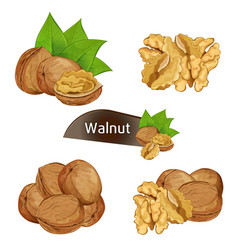 Walnut kernel in nutshell with leaves set vector