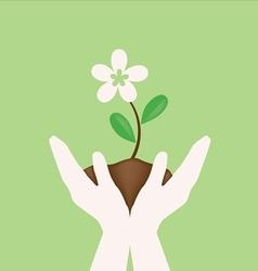 White flower on hand holding vector image