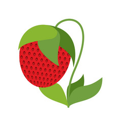 Strawberry on bush isolated red berries on white vector