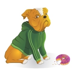 Bulldog wearing a jacket dinner donut vector