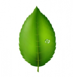 green leaf vector image vector image