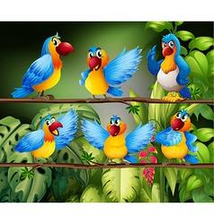 Parrots vector image vector image