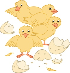 Hatched chicks vector