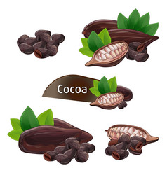 cocoa pod in nutshell with leaves set vector image vector image