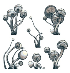 Cramped Toadstool Mushrooms Composition Collection vector image vector image