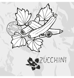Hand drawn whole and sliced zucchini vector