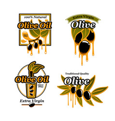 Olive oil icons and fresh green olives vector
