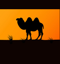 Silhouette camel on the background sunset vector