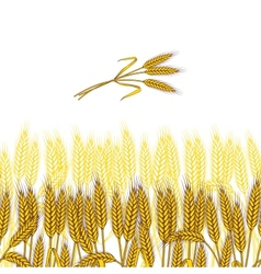 Background with ripe yellow wheat ears vector image
