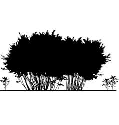 Bush vector image vector image