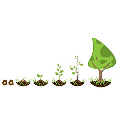 infographic of planting tree vector image vector image