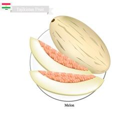 Ripe melon a popular fruit in tajikistan vector