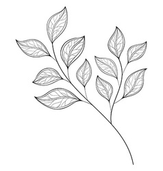 Beautiful Monochrome Contour Leaf vector image