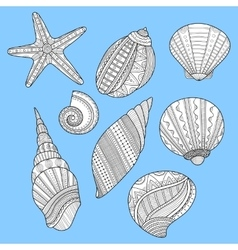 Black white sea shells for coloring book on blue vector