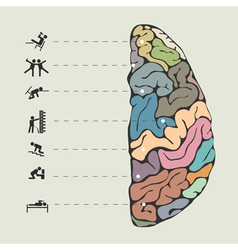 Funny concept of human brain vector image