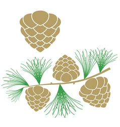 Pine cone larch tree vector