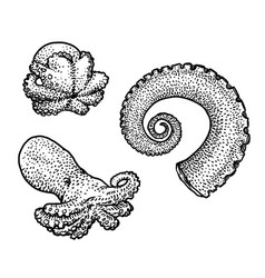 octopus and tentacle  drawing engrav vector image