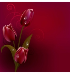 Red dark background with tulips vector
