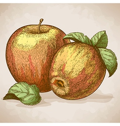 engraving two apples retro style vector image