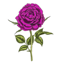 Hand drawn deep purple flower isolated on white vector