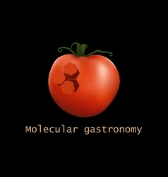 Stylized tomato structure molecular gastronomy vector