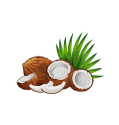 coconut with half and green palm leaves set vector image vector image