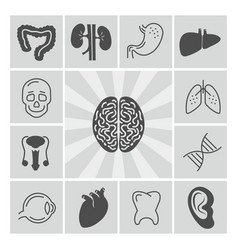 human organs thin line and silhouette icons vector image vector image