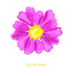 Decorative zinnia flower vector