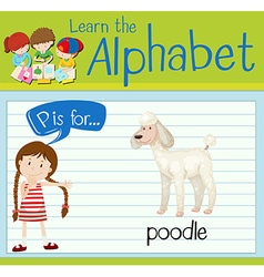 Flashcard letter P is for poodle vector image