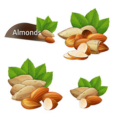 almond kernel with green leaves set vector image