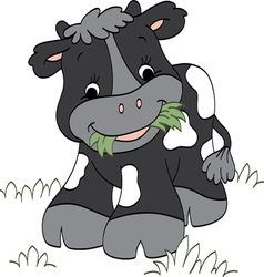 Calf chewing Grass vector image
