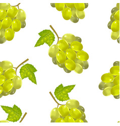 realistic detailed green bunch of grapes vector image