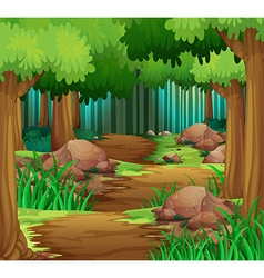 Scene with hiking track in the forest vector