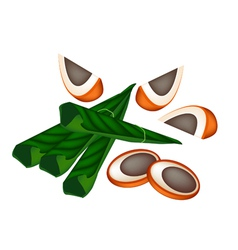 Ripe areca nuts and betel leaves vector