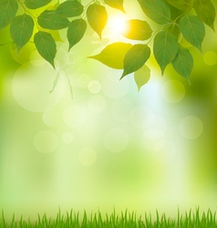Summer nature background with green leaves vector