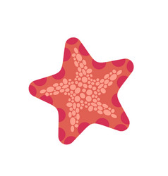 starfish isolated sea animals on white background vector image